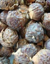 Tvättnötter 5 kg, pesupähkinät